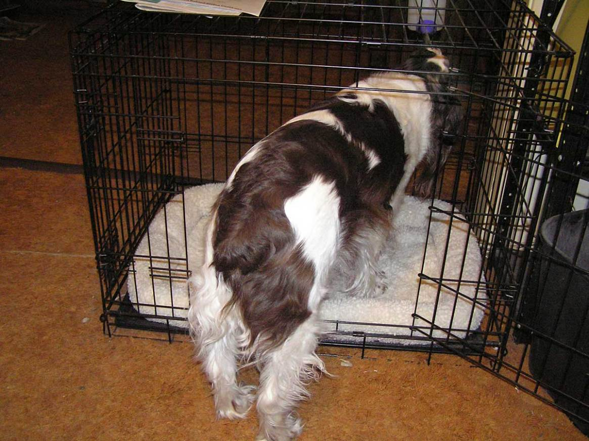 Trixie going in crate
