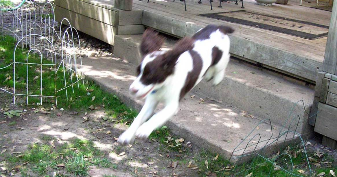 Trixie leaping down steps