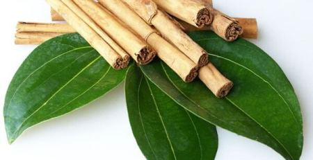 Цейлонская корица (Cinnamon zeylanicum)