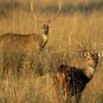 Dachigam National Park-
