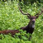 Parambikulam Wildlife Sanctuary