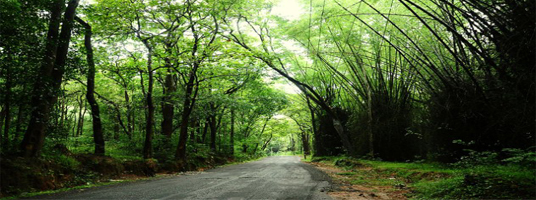 bamboo forest tourist places in wayanad
