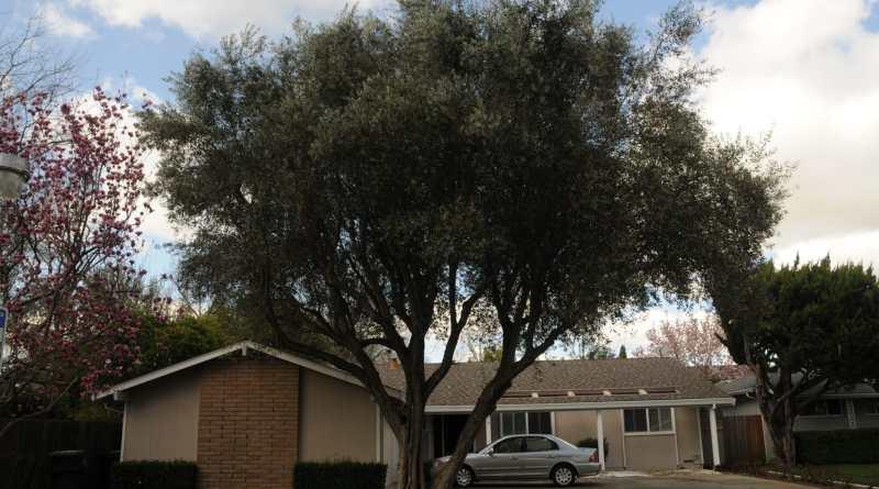 Trim Your Yard Tree