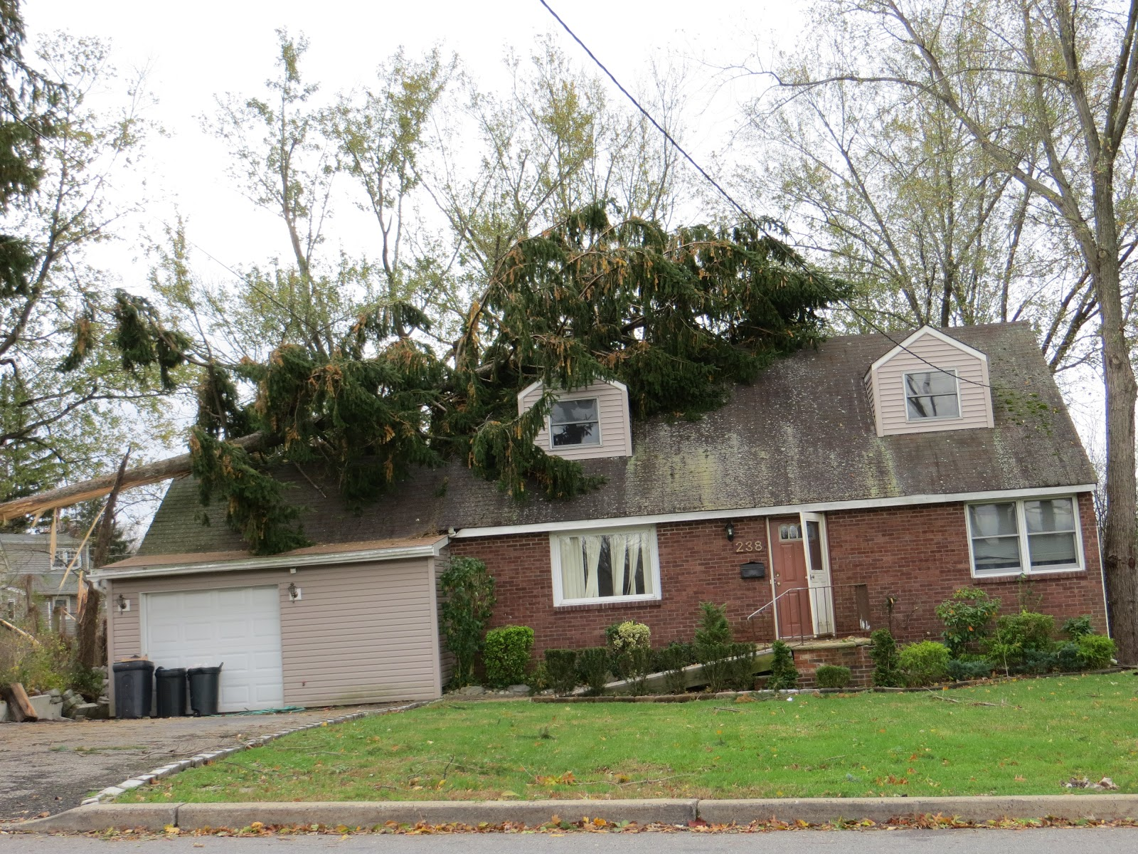 Tips For Protecting Trees From Storms