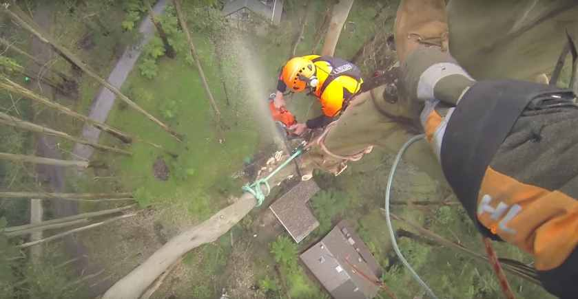 Spectacular Arborist Removes Tree Limbs From 229 Foot Tree