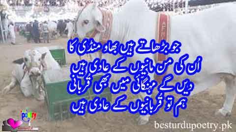 ham tu qurbani-youn kay aadi hain - eid ul adha mubarak - besturdupoetry.pk