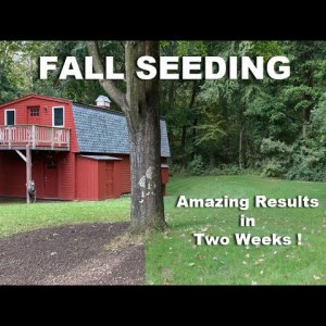 Fall Seeding, Great Results in Two Weeks - How To Seed your Lawn