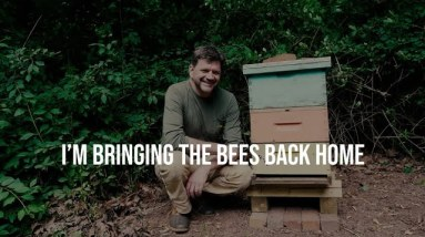 No More Dead Bees! - I want to be a Better Bee Keeper