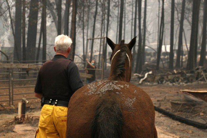 Yolo County Animal Services tends to a horse that was stranded during the fires. Credit: PA