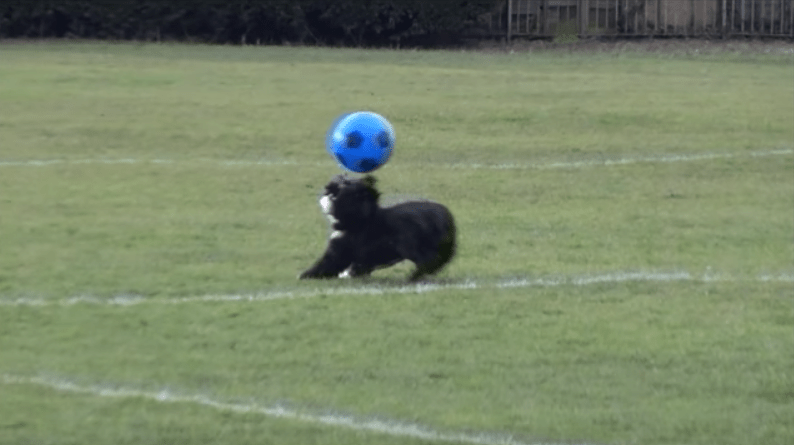 Meet 'Ronaldog': The Rescue Dog That Is Better At Football Than You