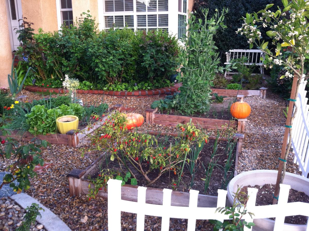 Karen's no-lawn front yard in California - FineGardening on No Lawn Garden Ideas  id=98919