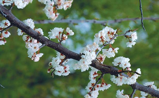Image result for spring trees in bloom