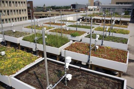 The Green Roof Innovation Testing Laboratory features several different garden beds.