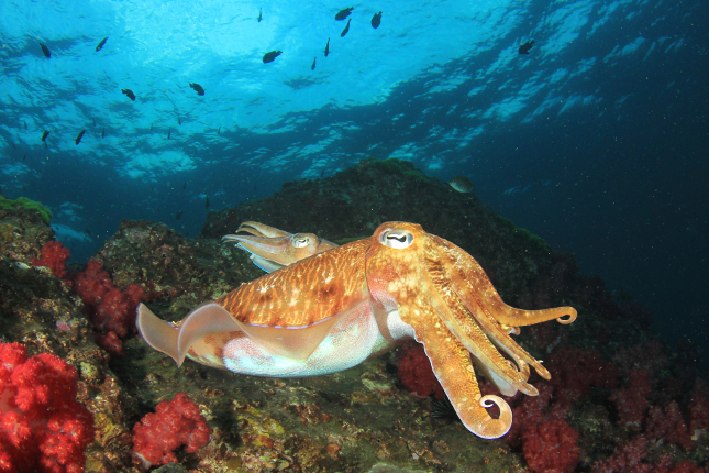 https://betanews.com/2018/05/08/ubuntu-linux-cosmic-cuttlefish-silly/