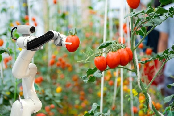 robot picking tomato