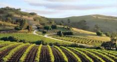 vineyard and cellar door