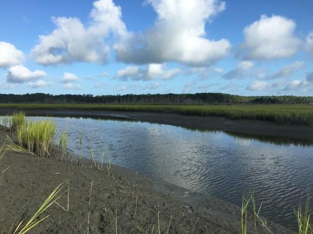 Last day in the field for the Uca-Sesarma Field Survey, Lower Phillips Creek, Nassawadox, VA