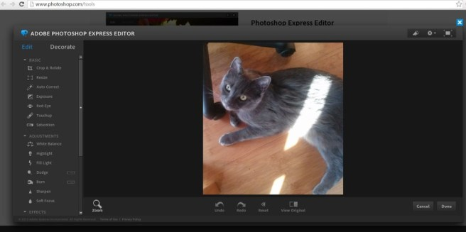 Screenshot of Photoshop Express being used to edit a photo of a gorgeous gray cat.