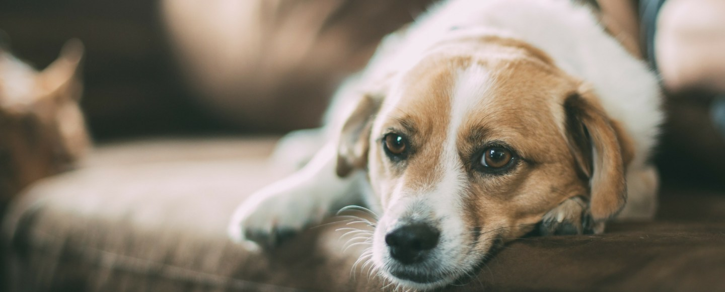 What I learned from my dog about being social