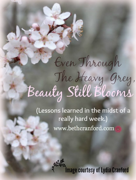 Beauty Still Blooms
