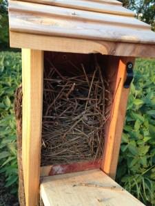 The wren's nest on top of the bluebird nest.