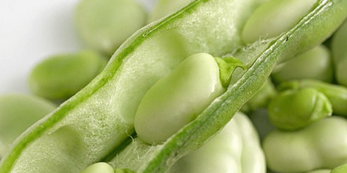Fava Beans – The Overlooked, Gluten Free Superfood
