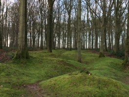 Former trenches in Delville Wood