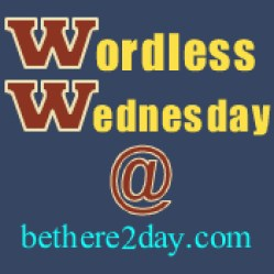 b2d Wordless Wednesday