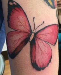 pinkbutterfly