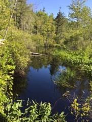 Pauchaug Turtles in Rhodie sanctuary 07.10.17