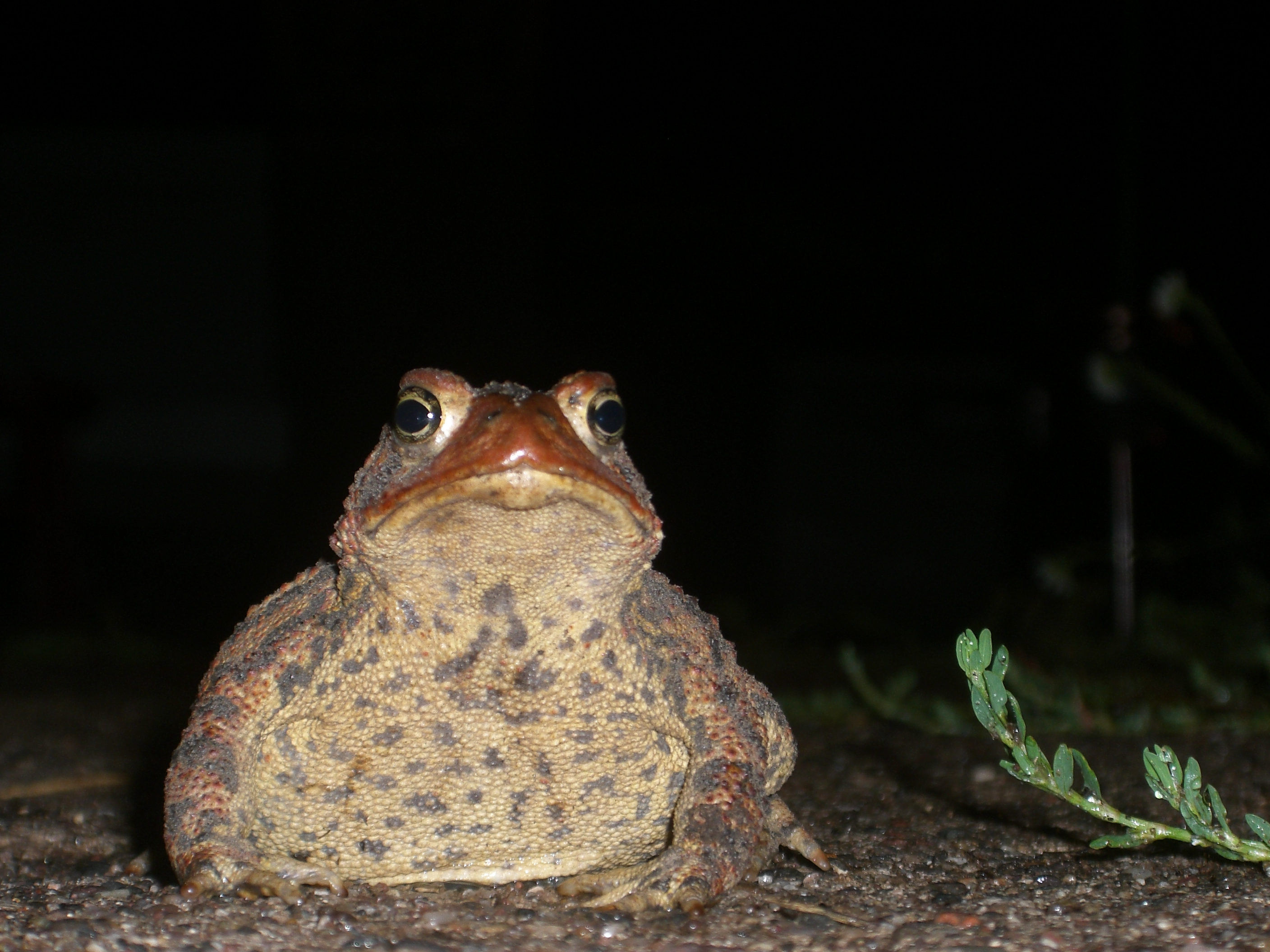 Frog Blog on the Toad Road time to Upload!   Jewelry ...
