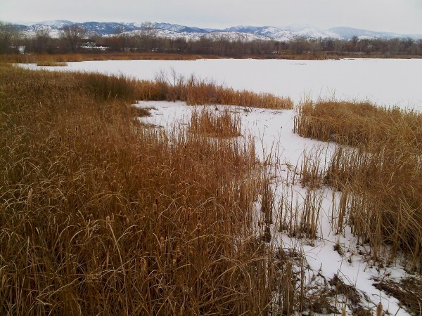 Beth Partin's photos, Walden Ponds, wildlife reserve Boulder County