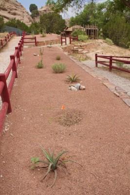 Xeriscape at Navajo Nation Zoo, 2013