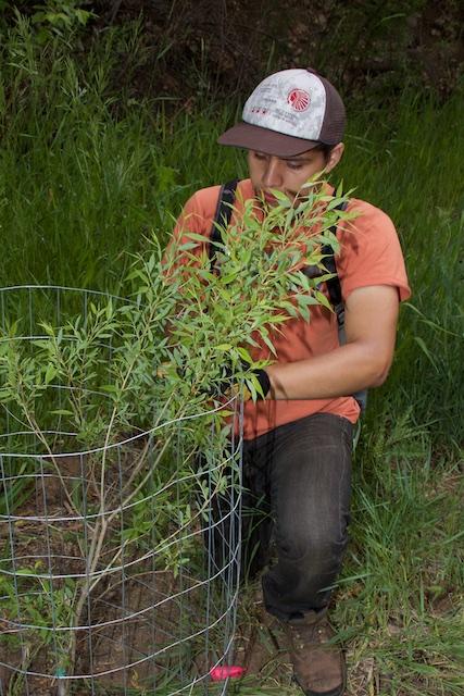Groundwork Denver planting trees at Bear Creek Park 2013 IMG_1591