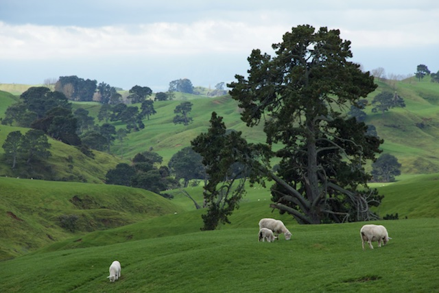 The Hobbiton Movie Set is located on a sheep farm near Matamata, North Island, New Zealand.
