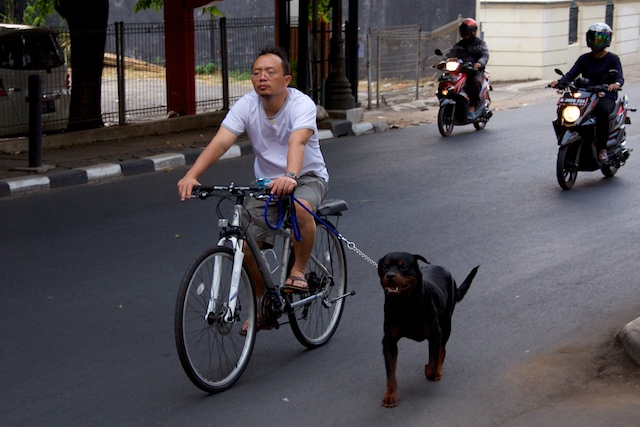 Dog and cyclist Jakarta Oct 2015