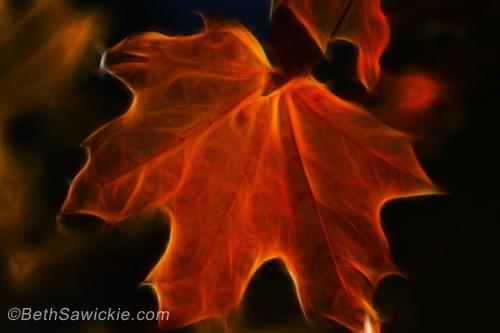 """""""Autumn Fire"""" image by Beth Sawickie -  www.bethsawickie.com/autumn-fire"""