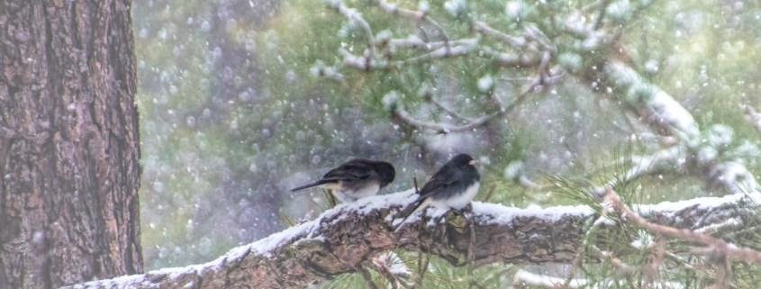 Blizzard Birds by Beth Sawickie