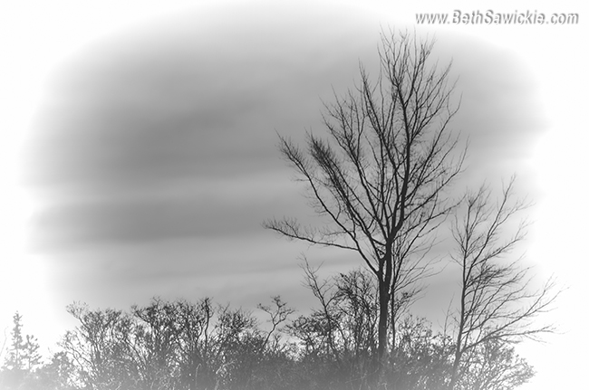 Bare Trees in Winter http://bethsawickie.com/bare-trees-in-winter