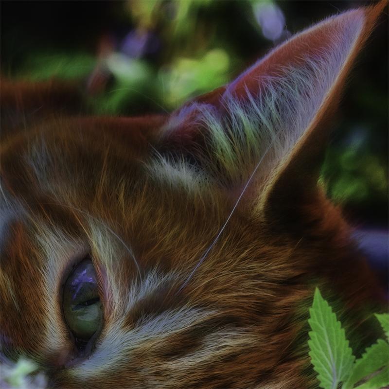 Detail of Catnip Chillin by Beth Sawickie