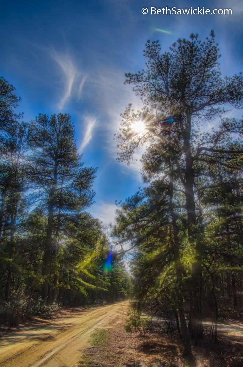 Glowing Pine Barrens Dirt Road by Beth Sawickie