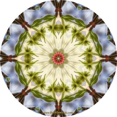 Dogwood Fractal Mandala by Beth Sawickie