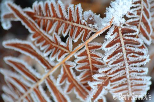 """Image by Beth Sawickie www.BethSawickie.com """"Snowy Fern Original"""""""