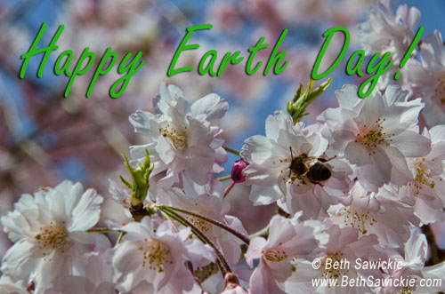 flowering-tree-earth-day