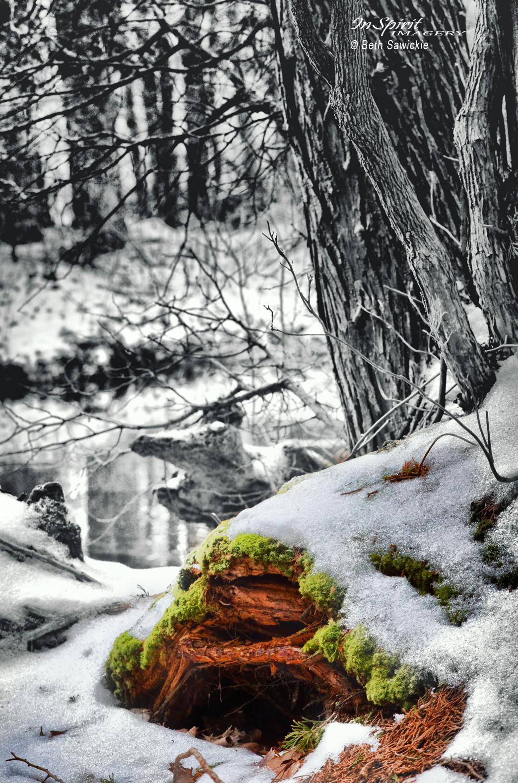 """Image by Beth Sawickie - www.BethSawickie.com """"Gnome Home #1"""""""
