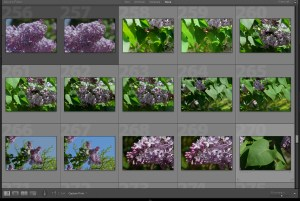 lilac-photos-beth-sawickie