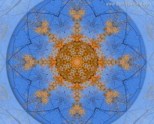 Looking Up Mandala 2 by Beth Sawickie http://bethsawickie.com/looking-up-mandala-2