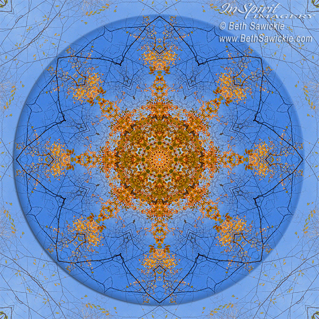 Looking Up Mandala 2 by Beth Sawickie http://bethsawickie.com/looking-up-mandala-2