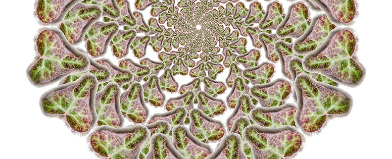 Love is natural mandala by Beth Sawickie