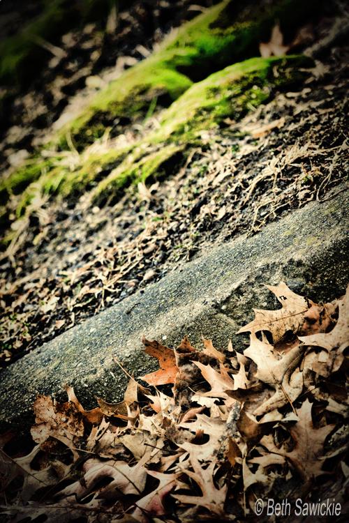 "Image by Beth Sawickie www.BethSawickie.com ""Moss Curb Leaves"""